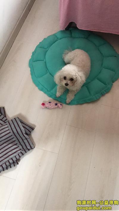 鞍山找狗,丢失白色比熊望好心人送回有重谢,它是一只非常可爱的宠物狗狗,希望它早日回家,不要变成流浪狗。