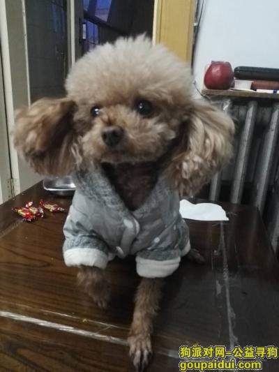牡丹江找狗,好心人帮帮我,养了7年的狗狗3.30清晨惊吓跑丢了,它是一只非常可爱的宠物狗狗,希望它早日回家,不要变成流浪狗。