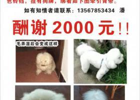 寻狗启示,寻找白色比熊,名字叫三毛,2019年3月28日下午1点15分在奉化大成桥附近走失,它是一只非常可爱的宠物狗狗,希望它早日回家,不要变成流浪狗。