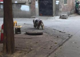 寻狗启示,广安大街经编厂宿舍内有这么一只流浪狗,它是一只非常可爱的宠物狗狗,希望它早日回家,不要变成流浪狗。