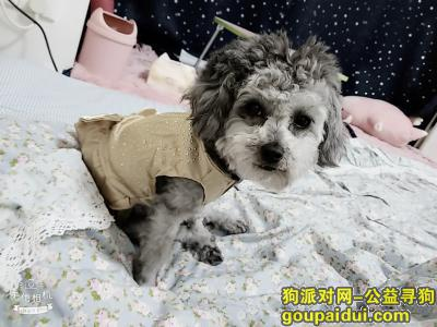 宜春丢狗,有偿寻狗,,3月30号在老火车站附近走失。。。。,它是一只非常可爱的宠物狗狗,希望它早日回家,不要变成流浪狗。