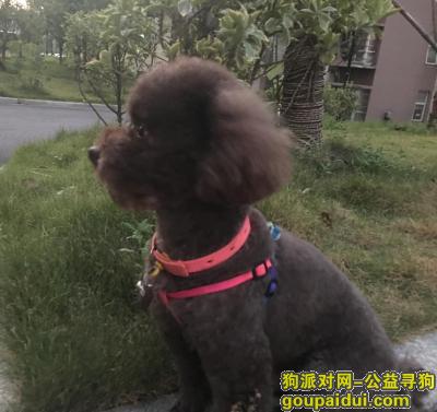 九江寻狗启示,4月4日 江西九江 咖啡色泰迪犬 公 小型犬,新华酒店附近湖滨东区路口丢失,它是一只非常可爱的宠物狗狗,希望它早日回家,不要变成流浪狗。