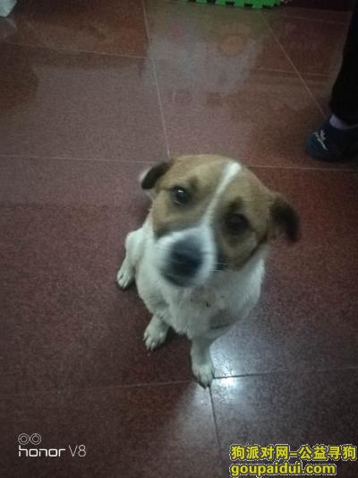 郑州寻狗主人,狗狗很忧伤,请狗主人尽快联系,它是一只非常可爱的宠物狗狗,希望它早日回家,不要变成流浪狗。
