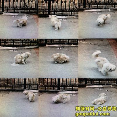 ,江门新会骏景湾旭涛雅轩附近寻狗,它是一只非常可爱的宠物狗狗,希望它早日回家,不要变成流浪狗。