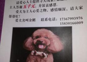 寻狗启示,寻求大家的帮助  请帮助帮助 非常感谢您!!!!,它是一只非常可爱的宠物狗狗,希望它早日回家,不要变成流浪狗。