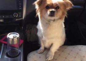 寻狗启示,点点,请你回家吧!!!!,它是一只非常可爱的宠物狗狗,希望它早日回家,不要变成流浪狗。