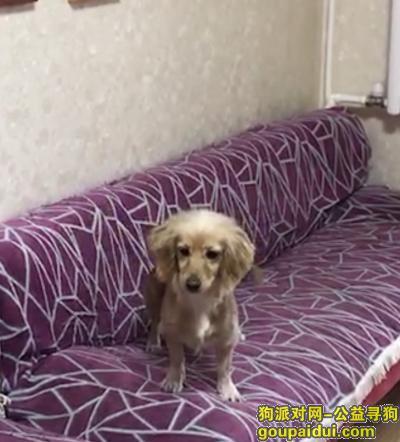 ,黄色英卡小母犬东环路西丢失,它是一只非常可爱的宠物狗狗,希望它早日回家,不要变成流浪狗。