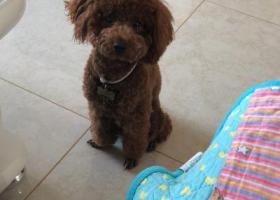 寻狗启示,狗狗名字叫毛毛,4.7日丢失,好心人看到请联系我,它是一只非常可爱的宠物狗狗,希望它早日回家,不要变成流浪狗。