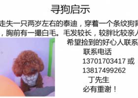 寻狗启示,长宁区中山公园龙之梦武夷路附近丢失一只泰迪,有偿寻找!!,它是一只非常可爱的宠物狗狗,希望它早日回家,不要变成流浪狗。