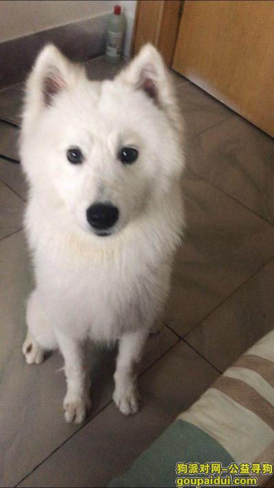 ,临汾市水门街重金寻狗,它是一只非常可爱的宠物狗狗,希望它早日回家,不要变成流浪狗。