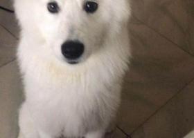 寻狗启示,临汾市水门街重金寻狗,它是一只非常可爱的宠物狗狗,希望它早日回家,不要变成流浪狗。