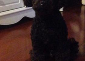 寻狗启示,汉口火车站附近2019.4.10号6岁黑色泰迪走失,它是一只非常可爱的宠物狗狗,希望它早日回家,不要变成流浪狗。