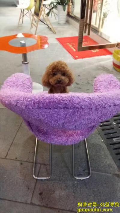 铜陵找狗,寻找我家㤗迪,毛棕色(公的),它是一只非常可爱的宠物狗狗,希望它早日回家,不要变成流浪狗。