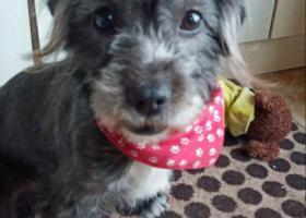 寻狗启示,在工农村艺墅南岸掉的狗????,它是一只非常可爱的宠物狗狗,希望它早日回家,不要变成流浪狗。