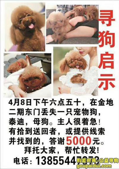 淮南找狗,我家泰迪丢了,拜托大家了,它是一只非常可爱的宠物狗狗,希望它早日回家,不要变成流浪狗。