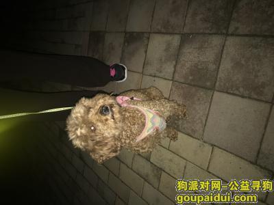 青岛找狗主人,寻泰迪主人 青岛市 四方区 兴隆路 附近,它是一只非常可爱的宠物狗狗,希望它早日回家,不要变成流浪狗。
