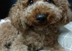 寻狗启示,狗狗走丢于番禺区汉溪长隆站,汉溪村,它是一只非常可爱的宠物狗狗,希望它早日回家,不要变成流浪狗。