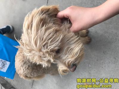 济南寻狗主人,山东大学齐鲁软件学院来了一条泰迪,它是一只非常可爱的宠物狗狗,希望它早日回家,不要变成流浪狗。