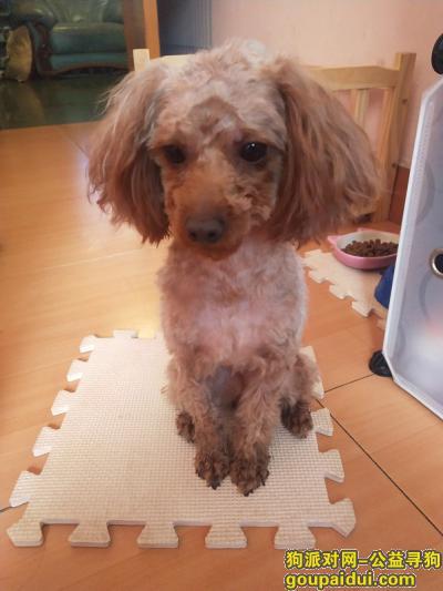 衡阳丢狗,湖南衡阳寻爱犬豆豆急!急!急!,它是一只非常可爱的宠物狗狗,希望它早日回家,不要变成流浪狗。