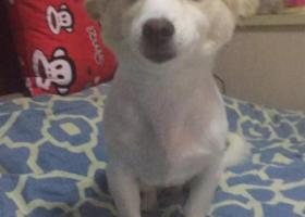 寻狗启示,淞南新五村小区门口走失爱犬,它是一只非常可爱的宠物狗狗,希望它早日回家,不要变成流浪狗。