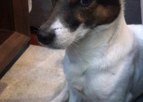 寻狗启示,4.14晚于亳州路附近重金寻狗,它是一只非常可爱的宠物狗狗,希望它早日回家,不要变成流浪狗。