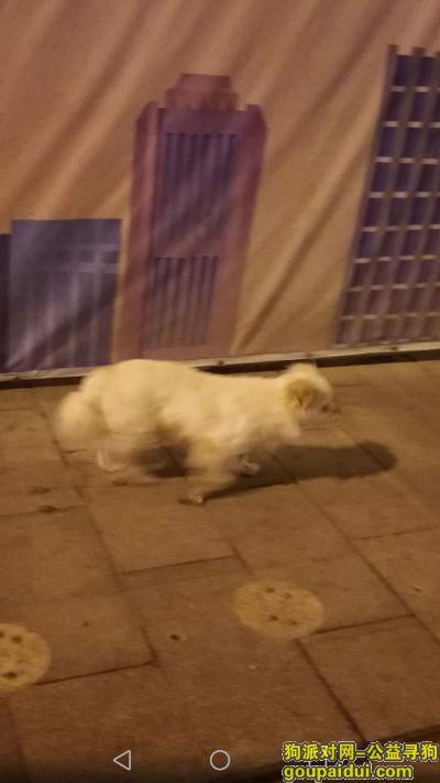 徐州找狗主人,黄河路庆云桥桥头,立交桥这头,狗主人去找找吧,它是一只非常可爱的宠物狗狗,希望它早日回家,不要变成流浪狗。