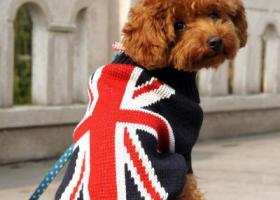 寻狗启示,万元找狗,狗狗对我们非常的重要,它是一只非常可爱的宠物狗狗,希望它早日回家,不要变成流浪狗。