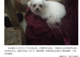 寻狗启示,找狗狗,苏苏,汉阳小区这附近,万分感谢,它是一只非常可爱的宠物狗狗,希望它早日回家,不要变成流浪狗。