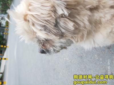 济南找狗主人,寻找失主,狗在金锣肉冷鲜店一直坐着,它是一只非常可爱的宠物狗狗,希望它早日回家,不要变成流浪狗。