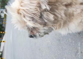 寻狗启示,寻找失主,狗在金锣肉冷鲜店一直坐着,它是一只非常可爱的宠物狗狗,希望它早日回家,不要变成流浪狗。