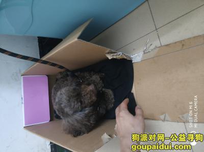 南宁捡到狗,狗狗是我朋友送外卖捡得,快点领回去吧,没时间看它~~联系qq451515718,它是一只非常可爱的宠物狗狗,希望它早日回家,不要变成流浪狗。