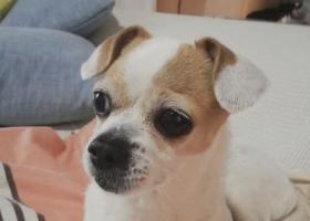 寻狗启示,滇池路,怡景路,迎海路附近,它是一只非常可爱的宠物狗狗,希望它早日回家,不要变成流浪狗。