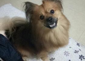 寻狗启示,他的名字叫淘淘, 有谁看到过他吗 ?,它是一只非常可爱的宠物狗狗,希望它早日回家,不要变成流浪狗。