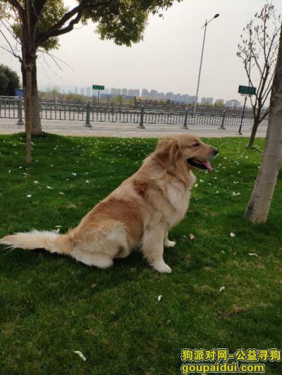 盐城 射阳县兴庆居委会酬谢三千元寻找金毛,它是一只非常可爱的宠物狗狗,希望它早日回家,不要变成流浪狗。