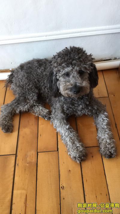 寻狗启示,已经找到了,它是一只非常可爱的宠物狗狗,希望它早日回家,不要变成流浪狗。