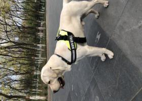 寻狗启示,北京朝阳区十八里店附近丢失爱犬,三天三夜了,寝食难安,望知情者联系,它是一只非常可爱的宠物狗狗,希望它早日回家,不要变成流浪狗。
