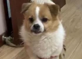 寻狗启示,清芷园小区狗狗走失,求找回,它是一只非常可爱的宠物狗狗,希望它早日回家,不要变成流浪狗。