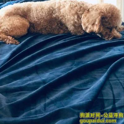 莆田寻狗启示,【寻狗启示】于4月20号晚上6点50分在博物馆对面滨溪佳园小区走丢 主人寝食难安 找到者有重谢,它是一只非常可爱的宠物狗狗,希望它早日回家,不要变成流浪狗。