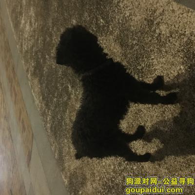 汕头找狗主人,壹品湾附近,黑色的毛狗,脖子有条带子,麻烦有遗失或者愿意领养的请尽快附近找找,谢谢!,它是一只非常可爱的宠物狗狗,希望它早日回家,不要变成流浪狗。