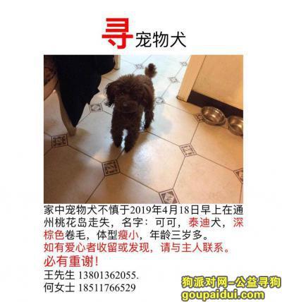 北京 通州区桃花岛小区酬谢3000元寻找泰迪,它是一只非常可爱的宠物狗狗,希望它早日回家,不要变成流浪狗。