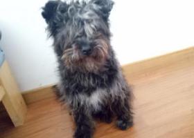 寻狗启示,闵行区中春路疏影路附近捡到的,它是一只非常可爱的宠物狗狗,希望它早日回家,不要变成流浪狗。