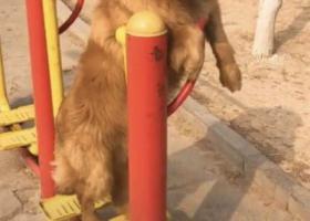 寻狗启示,寻 新华区北郡小区附近走丢狗狗,它是一只非常可爱的宠物狗狗,希望它早日回家,不要变成流浪狗。