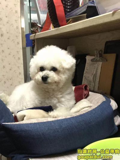 嘉兴找狗,旭辉 新华书店 中山东桥 寻找白色比熊,它是一只非常可爱的宠物狗狗,希望它早日回家,不要变成流浪狗。