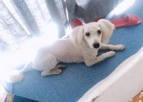 寻狗启示,下城区三塘捡到一只狗,,它是一只非常可爱的宠物狗狗,希望它早日回家,不要变成流浪狗。