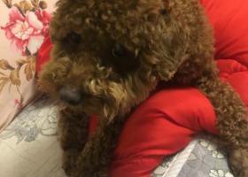 寻狗启示,芜湖雕塑公园附近狗狗丢失,它是一只非常可爱的宠物狗狗,希望它早日回家,不要变成流浪狗。