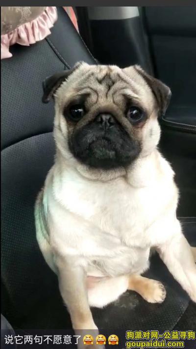 连云港寻狗启示,寻狗 狗狗让人偷去了,它是一只非常可爱的宠物狗狗,希望它早日回家,不要变成流浪狗。