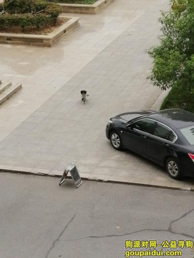 鄂州寻狗网,谁家丢的狗?快快联系,它是一只非常可爱的宠物狗狗,希望它早日回家,不要变成流浪狗。