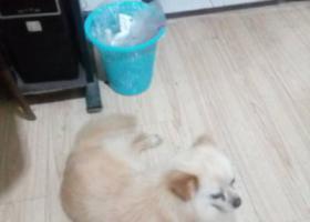 寻狗启示,双流区长冶路捡到一只小狗,它是一只非常可爱的宠物狗狗,希望它早日回家,不要变成流浪狗。