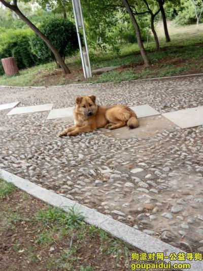 临沂找狗,临沂市沂水县金仕顿大酒店正阳路南,它是一只非常可爱的宠物狗狗,希望它早日回家,不要变成流浪狗。