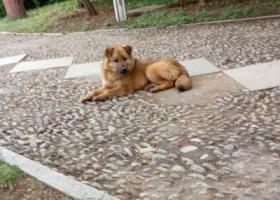 寻狗启示,临沂市沂水县金仕顿大酒店正阳路南,它是一只非常可爱的宠物狗狗,希望它早日回家,不要变成流浪狗。